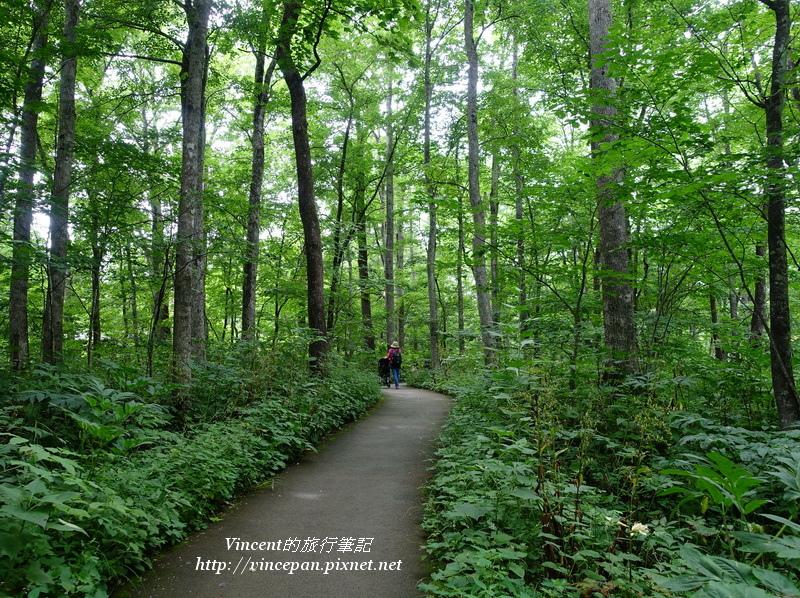 入口森林2
