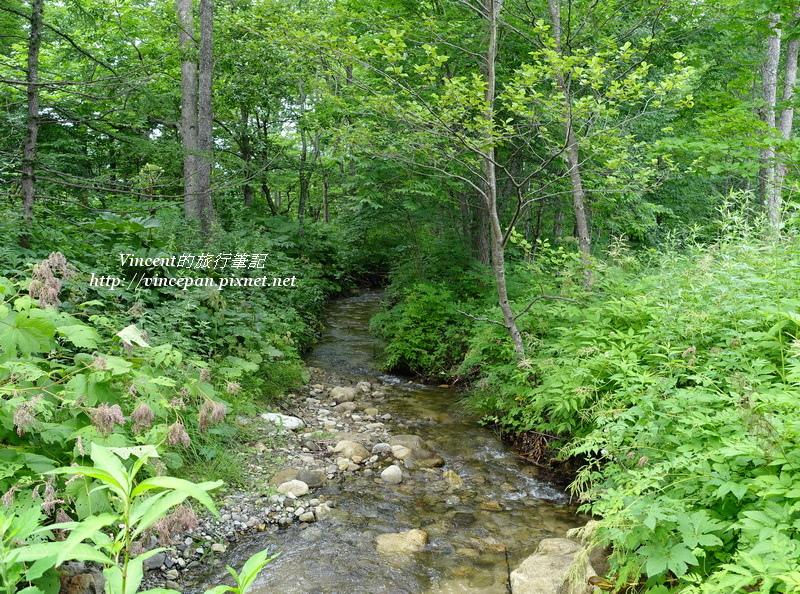入口森林小溪
