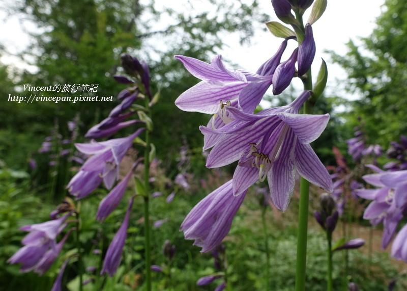 六花之森花卉1