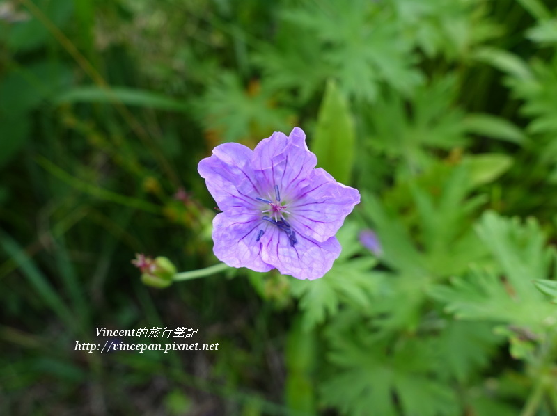 六花之森花卉2