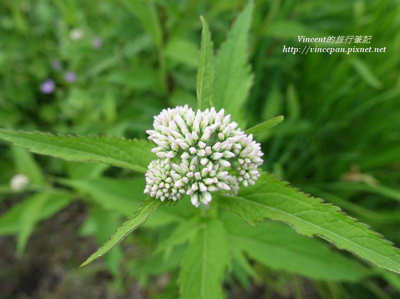 六花之森花卉3