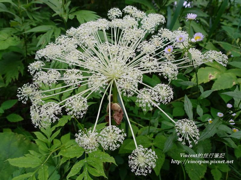 六花之森花卉4