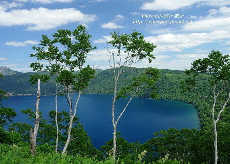 摩周湖 樹木
