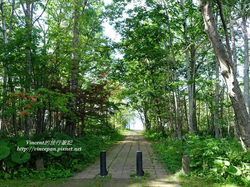 步道穿越樹林