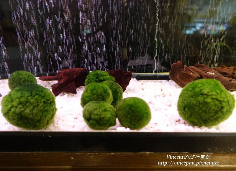 綠球藻MARIMO