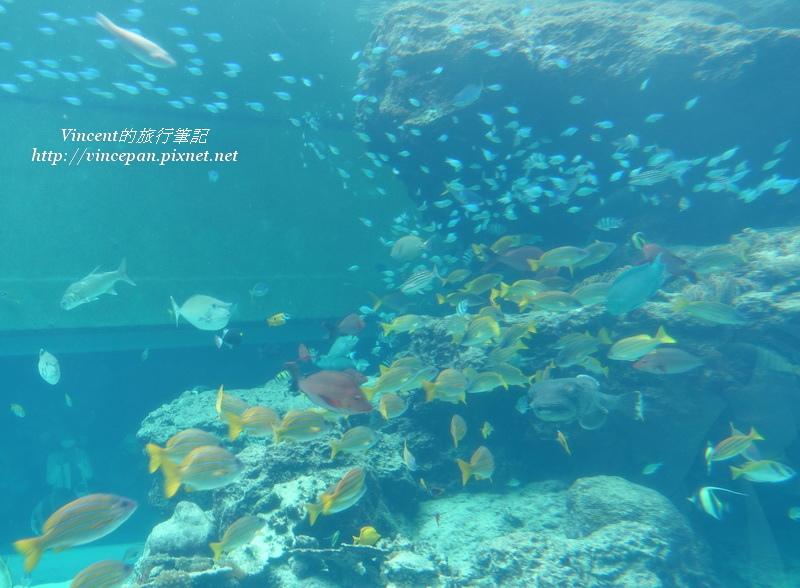 熱帶魚之海