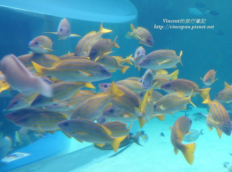 熱帶魚之海 魚