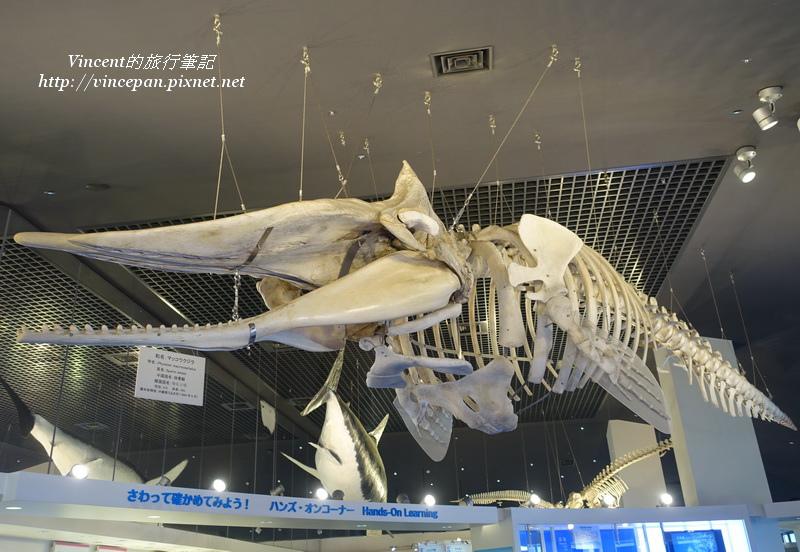鯨魚骨骼標本