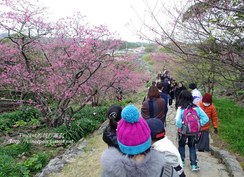 賞櫻走道遊客