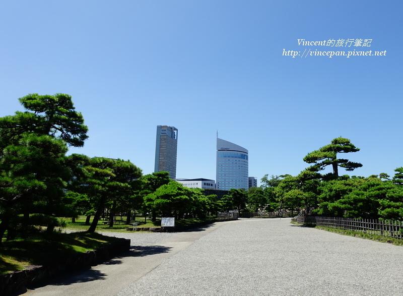 松樹  往櫻御門