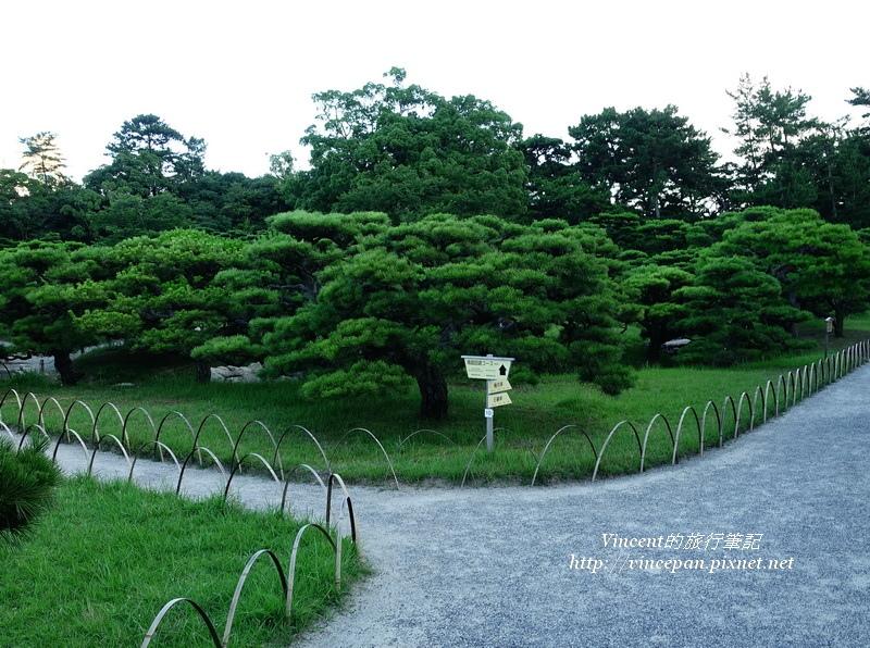 松樹 步道