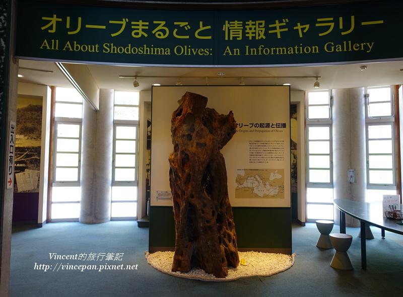 橄欖的歷史展示區
