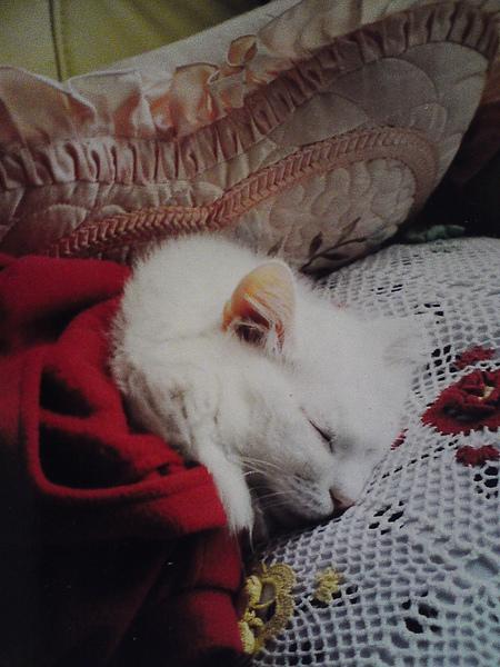 Mimi cat.jpg
