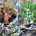 succulent-wreath3_Fotor_Collage1