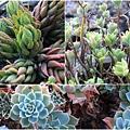 succulent-wreath3_Fotor_Collage2