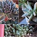 succulent-wreath3_Fotor_Collage3