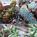 succulent-wreath3_Fotor_Collage4
