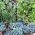 succulent-wreath3_Fotor_Collage5