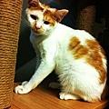 2012-09-14輸入照片 037