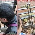 1010214_六福莊長頸鹿找米拔