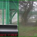 1010215_六福莊村動物園2黑熊