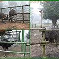 1010215_六福莊村動物園5鴕鳥