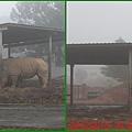 1010215_六福莊村動物園7犀牛
