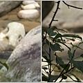 1010630_南庄護魚步道蜻蜓3