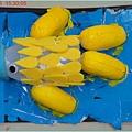 1010703_美術彩虹魚