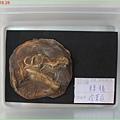 1010818_恐龍營化石成品