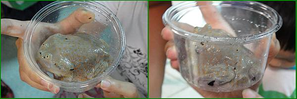1010907_昆蟲課小丑蛙裝杯
