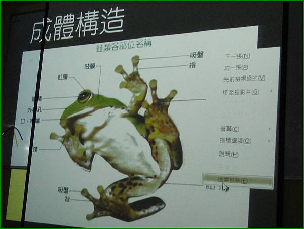 1010907_昆蟲課青蛙構造