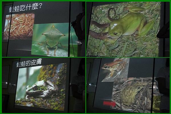 1010907_昆蟲課青蛙常識