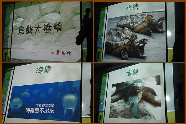 1011012_昆蟲課烏龜