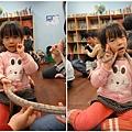 1011205_蝌蚪班大玉米蛇