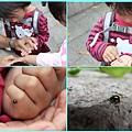 1020322_芝山岩瓢蟲