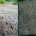 1020322_芝山岩昆蟲