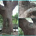 1020322_芝山岩黃大樹OK繃