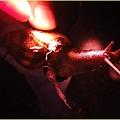 1020504_賞螢螢火蟲吃蝸牛