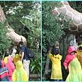 1020514_zoo長頸鹿摸肚