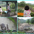 1020514_zoo斑馬回家