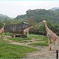 1020514_zoo長頸鹿