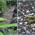1020618_zoo螳螂