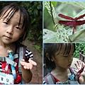 1020618_zoo蜻蜓