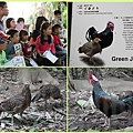 1021028_zoo綠野雞
