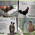 1021028_zoo紅原雞