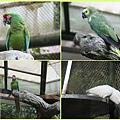 1021028_zoo鸚鵡
