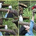 1021028_zoo手餵鸚鵡