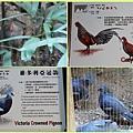 1021028_zoo灰原雞