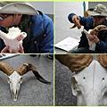 1030205_zoo冬令營綿羊頭